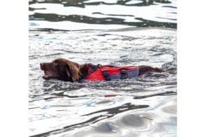 Populairste Honden SUP Accessoires: Top 5
